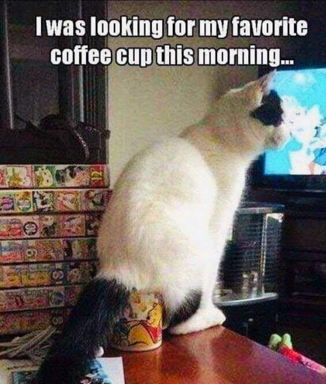 Cat on coffee cup (2).jpg