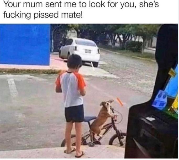 Doggo Mum's pissed..png